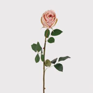 Soft pink rose stem