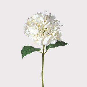 White hydrangea (real feel)